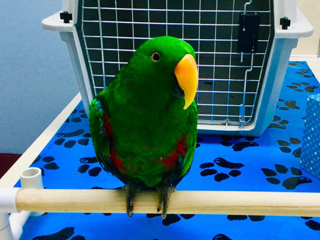 Exotic Animals - Largo, Florida - Seminole Boulevard Animal Hospital
